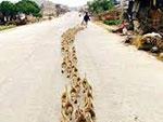 suiveurs