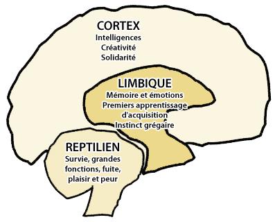 schema cerebral