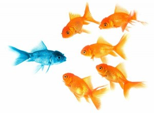 poissons-jaunes-bleus