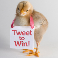 twitter-contest-funny